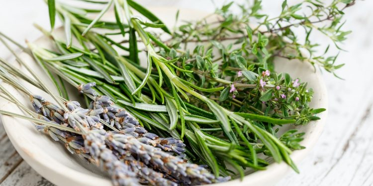 Popular Aromatic Herbs